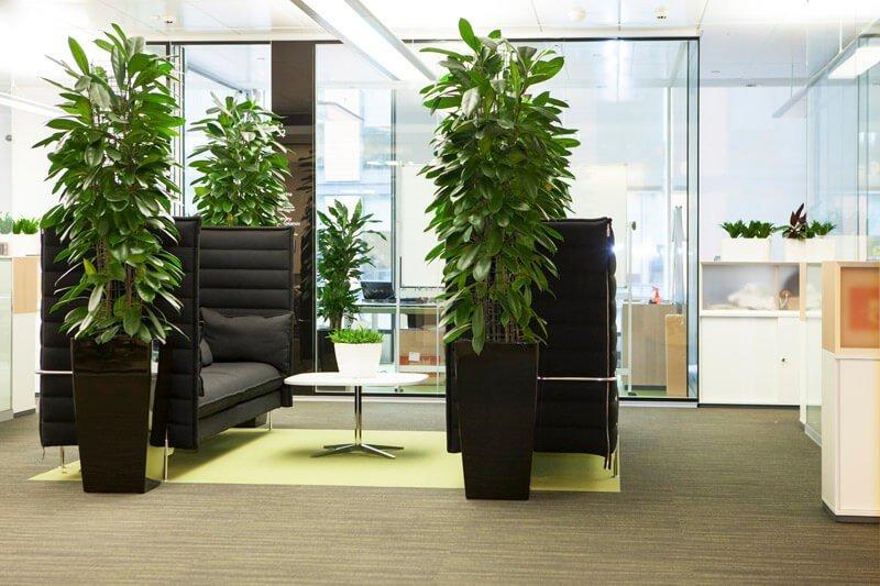 Озеленение офисов 2